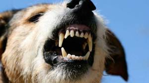 roid rage in your dogs if you don t who will
